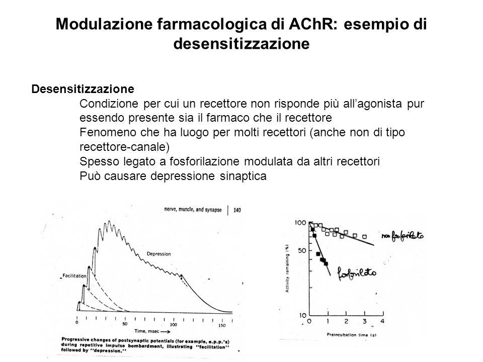 Modulazione farmacologica di AChR: esempio di desensitizzazione