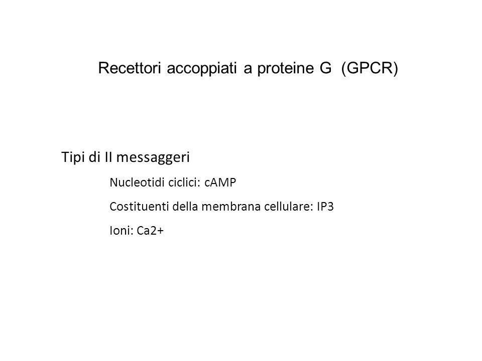 Recettori accoppiati a proteine G (GPCR)