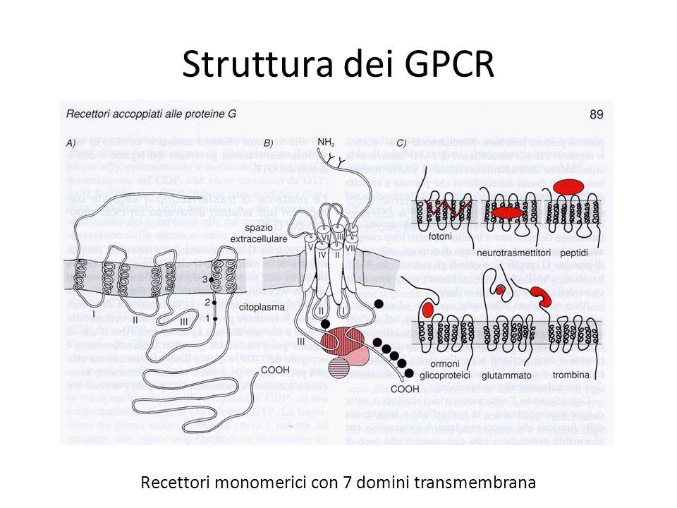 Recettori monomerici con 7 domini transmembrana