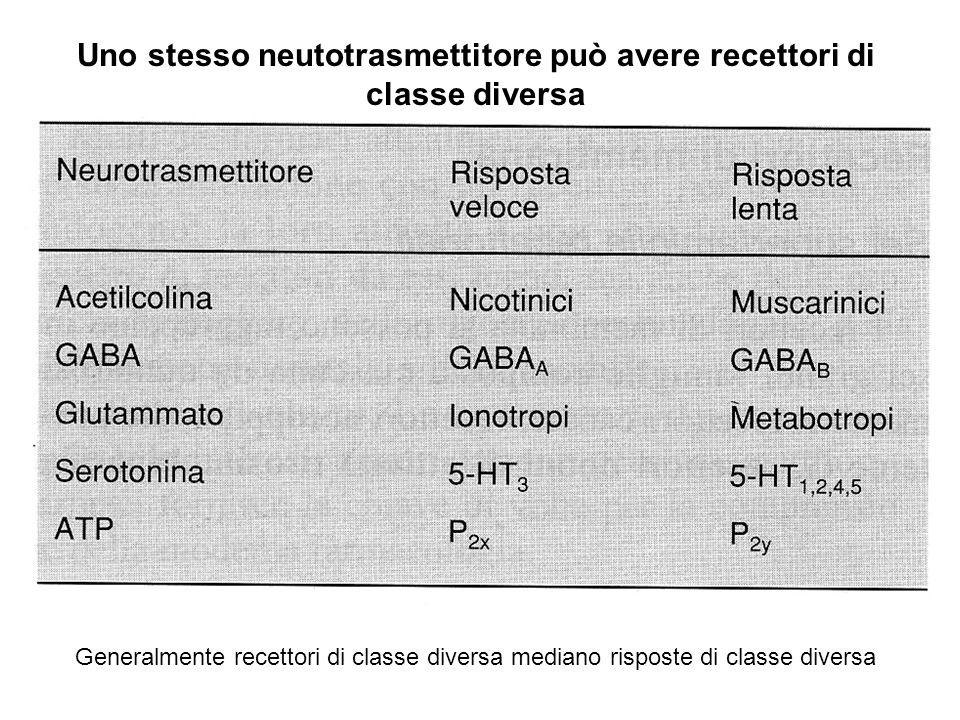 Uno stesso neutotrasmettitore può avere recettori di classe diversa