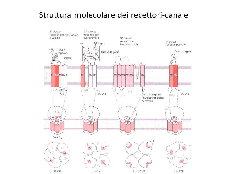 Struttura molecolare dei recettori-canale