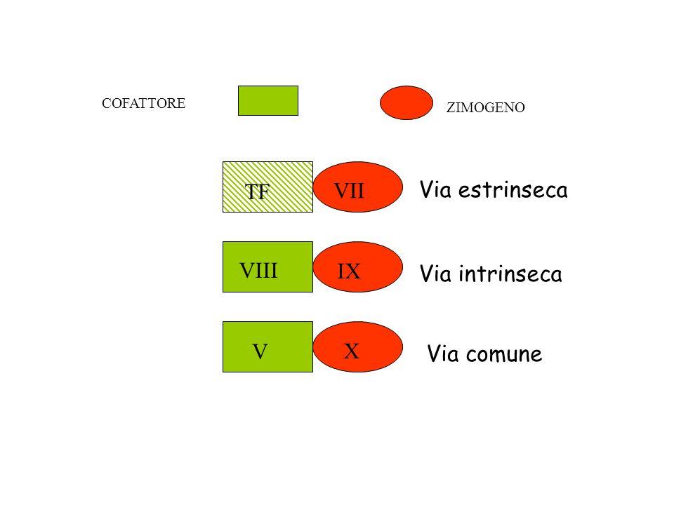 TF VII Via estrinseca IX VIII Via intrinseca X V Via comune COFATTORE