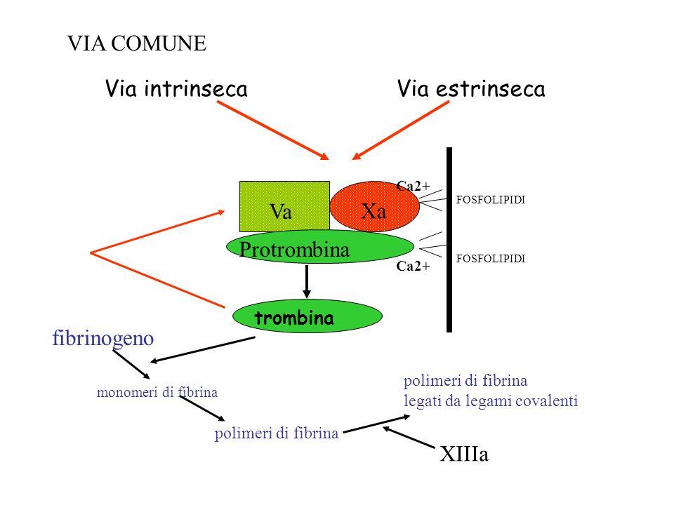 VIA COMUNE Via estrinseca Via intrinseca Xa Va Protrombina fibrinogeno