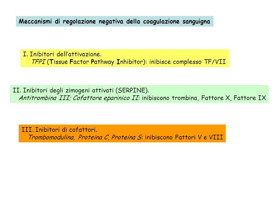 Meccanismi di regolazione negativa della coagulazione sanguigna