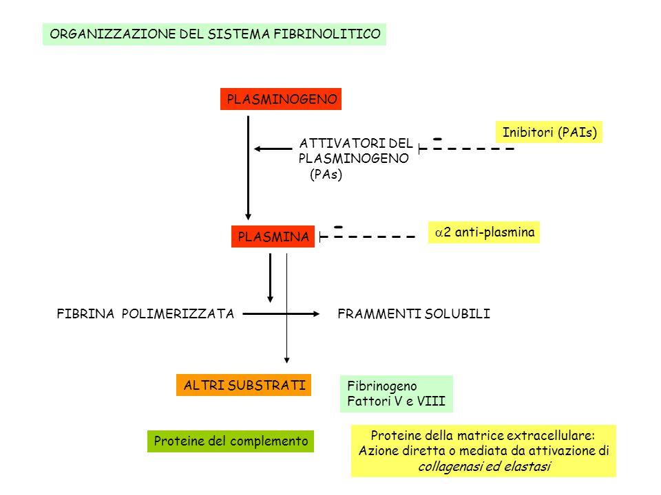 - - ORGANIZZAZIONE DEL SISTEMA FIBRINOLITICO PLASMINOGENO