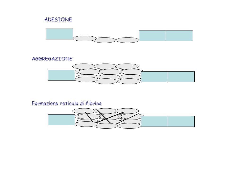 ADESIONE AGGREGAZIONE Formazione reticolo di fibrina