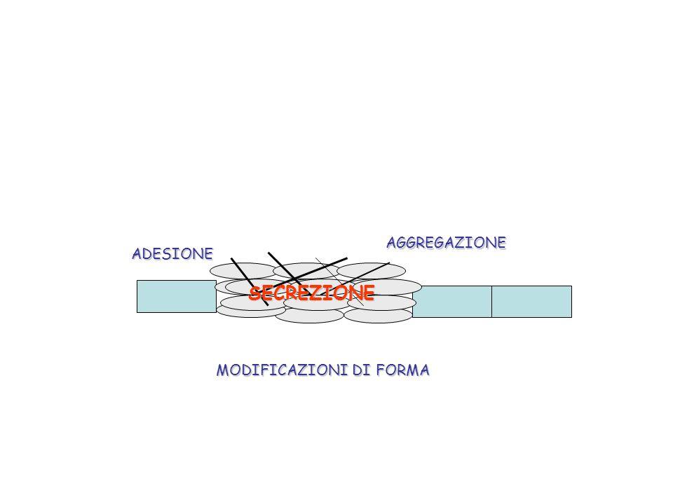 AGGREGAZIONE ADESIONE SECREZIONE MODIFICAZIONI DI FORMA