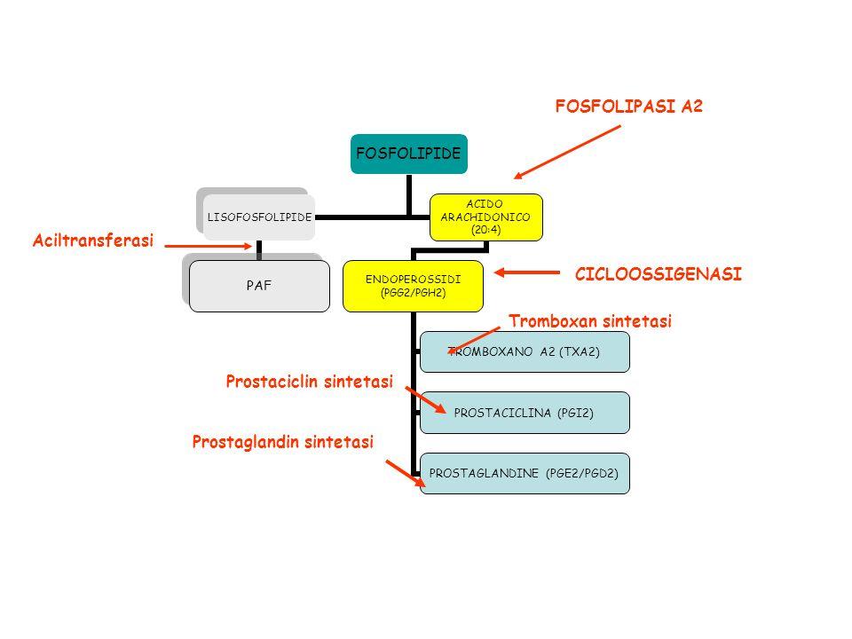 FOSFOLIPASI A2 Aciltransferasi. CICLOOSSIGENASI.