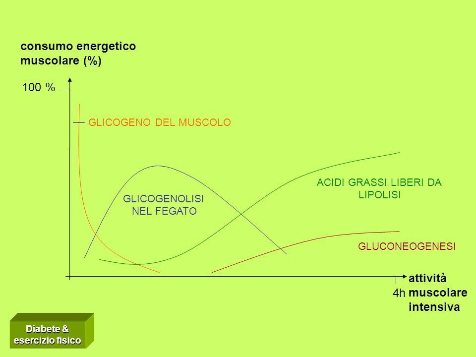 consumo energetico muscolare (%) 100 % attività muscolare 4h intensiva