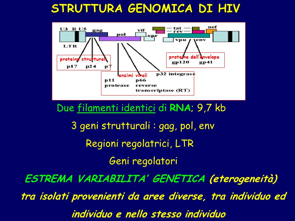 STRUTTURA GENOMICA DI HIV
