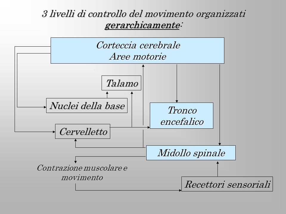 3 livelli di controllo del movimento organizzati gerarchicamente: