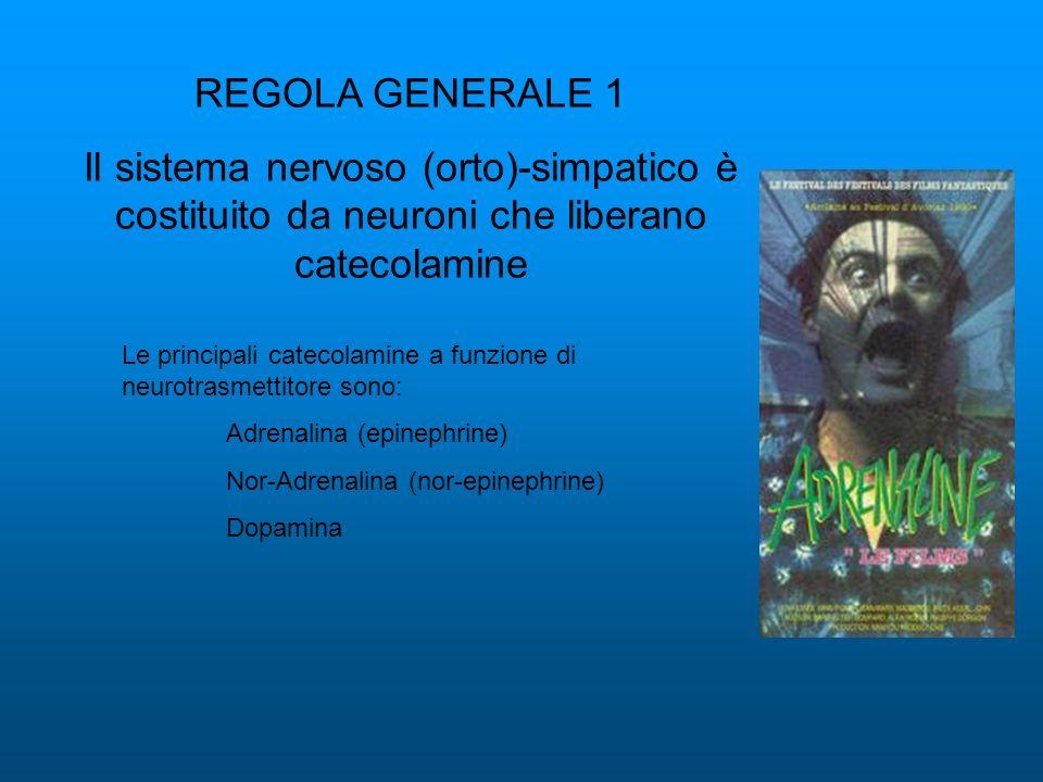 REGOLA GENERALE 1 Il sistema nervoso (orto)-simpatico è costituito da neuroni che liberano catecolamine.