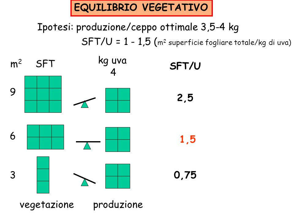 EQUILIBRIO VEGETATIVO