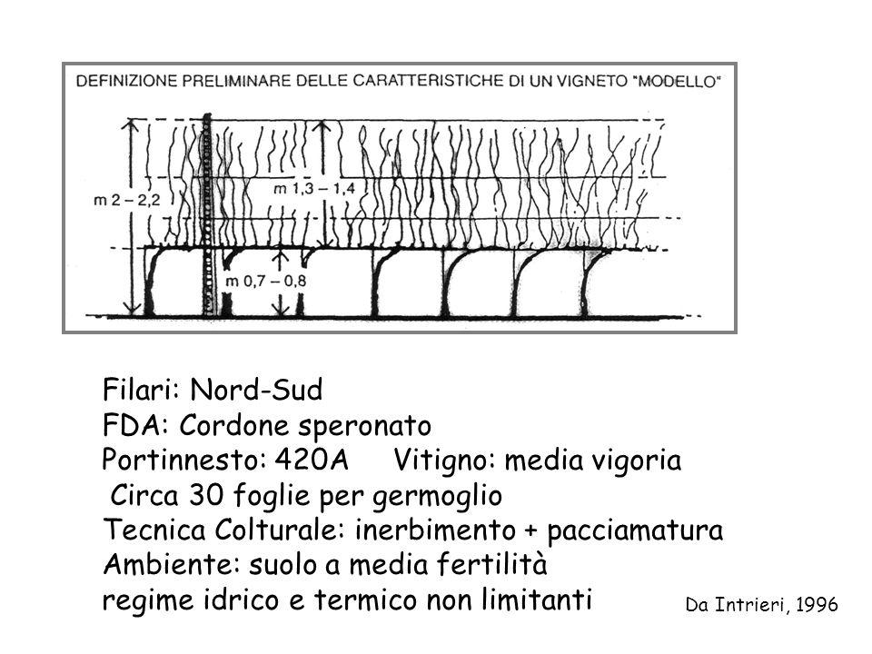 Filari: Nord-Sud FDA: Cordone speronato Portinnesto: 420A Vitigno: media vigoria Circa 30 foglie per germoglio