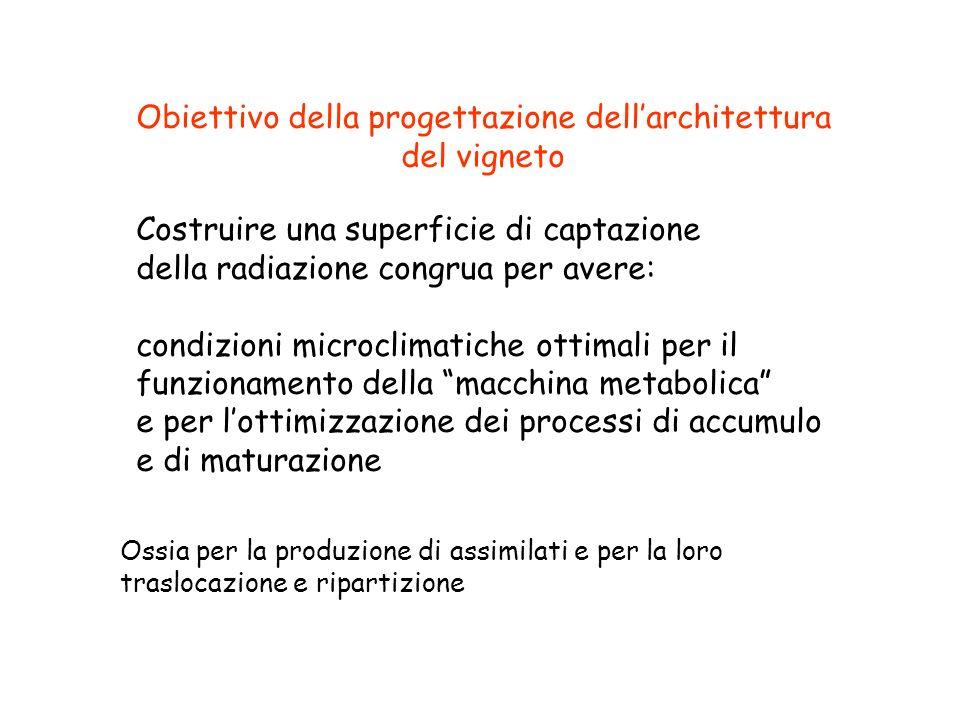 Obiettivo della progettazione dell'architettura del vigneto