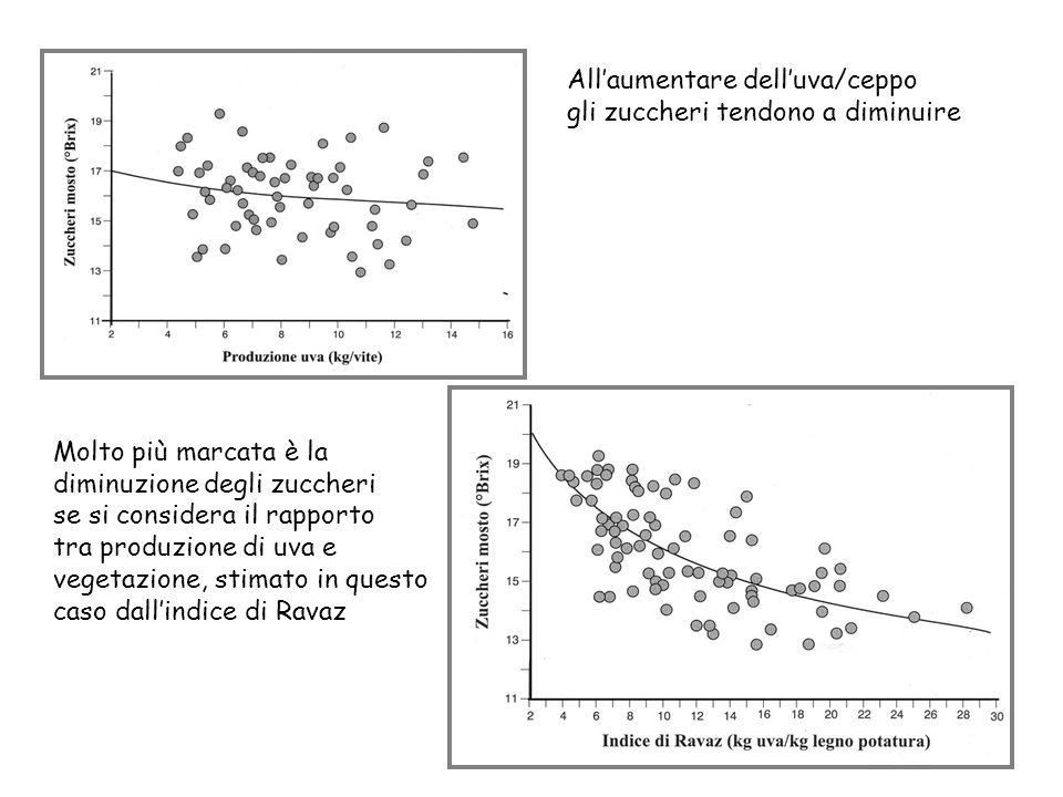 All'aumentare dell'uva/ceppo gli zuccheri tendono a diminuire