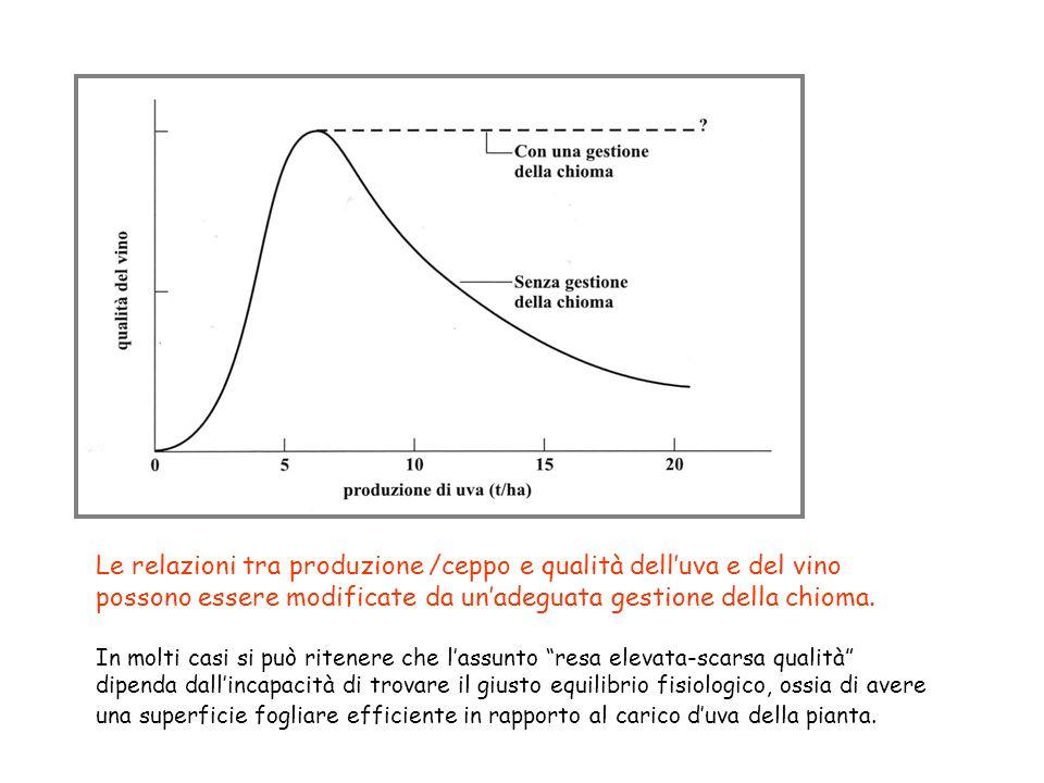 Le relazioni tra produzione /ceppo e qualità dell'uva e del vino possono essere modificate da un'adeguata gestione della chioma.