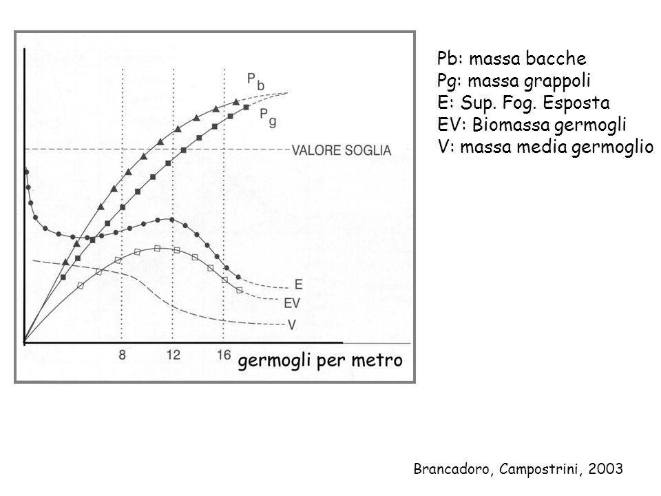 Pb: massa bacche Pg: massa grappoli E: Sup. Fog