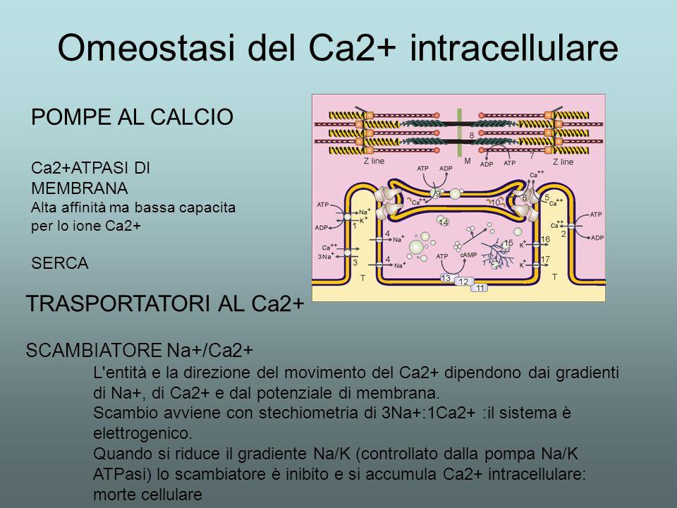 Omeostasi del Ca2+ intracellulare