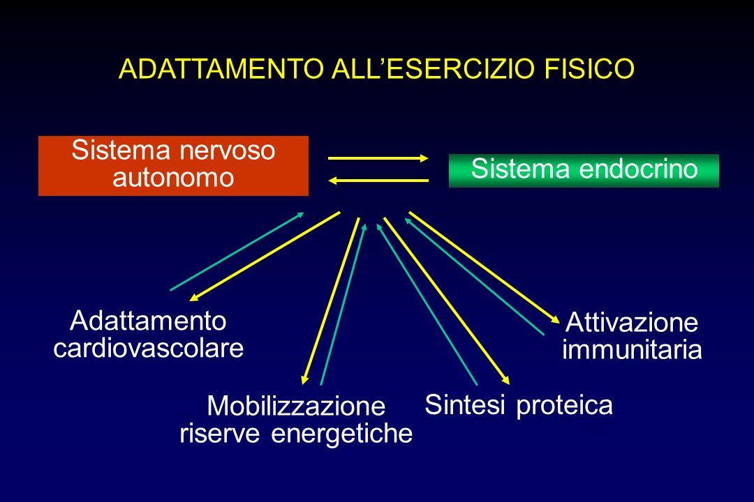 ADATTAMENTO ALL'ESERCIZIO FISICO