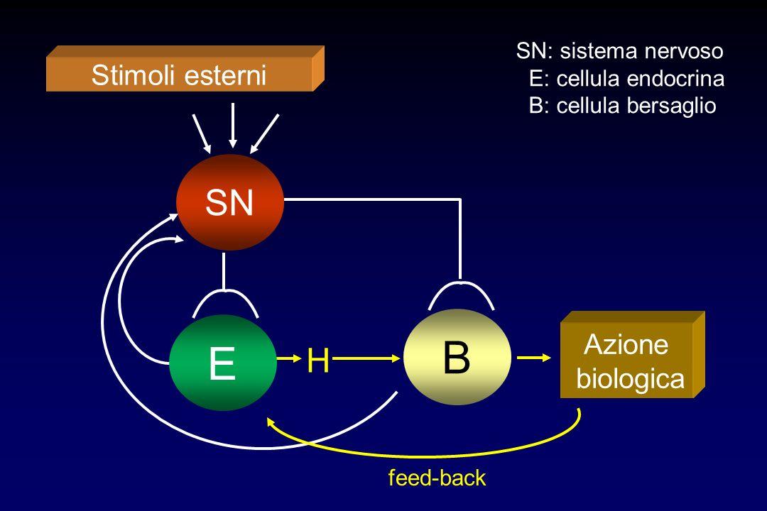 B E SN H Stimoli esterni Azione biologica SN: sistema nervoso