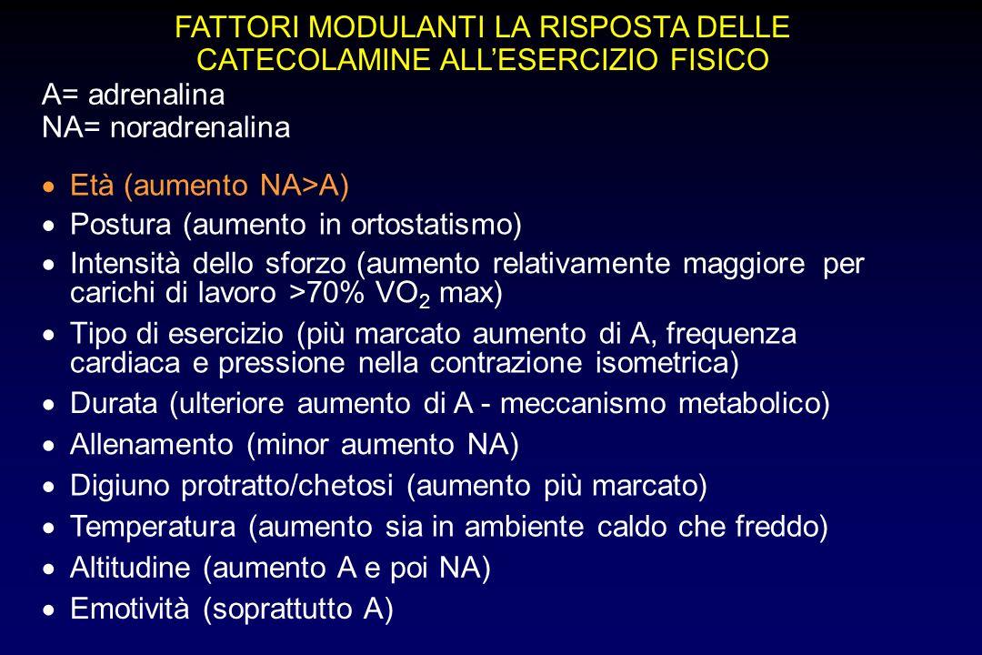 FATTORI MODULANTI LA RISPOSTA DELLE CATECOLAMINE ALL'ESERCIZIO FISICO