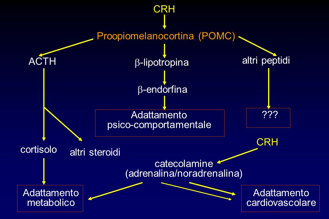 Proopiomelanocortina (POMC)