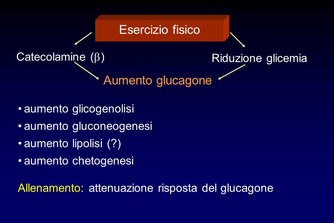 Esercizio fisico Aumento glucagone Catecolamine (b) Riduzione glicemia