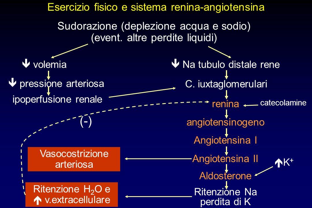 (-) Esercizio fisico e sistema renina-angiotensina