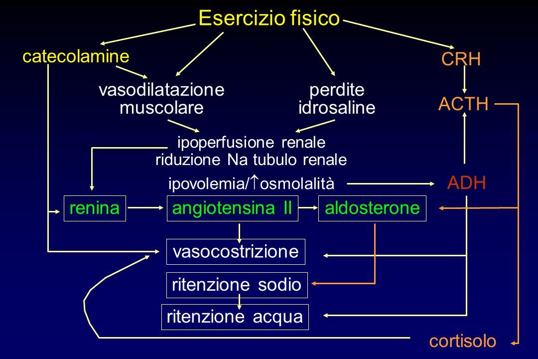 Esercizio fisico vasodilatazione muscolare perdite idrosaline