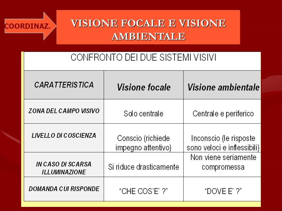 VISIONE FOCALE E VISIONE AMBIENTALE