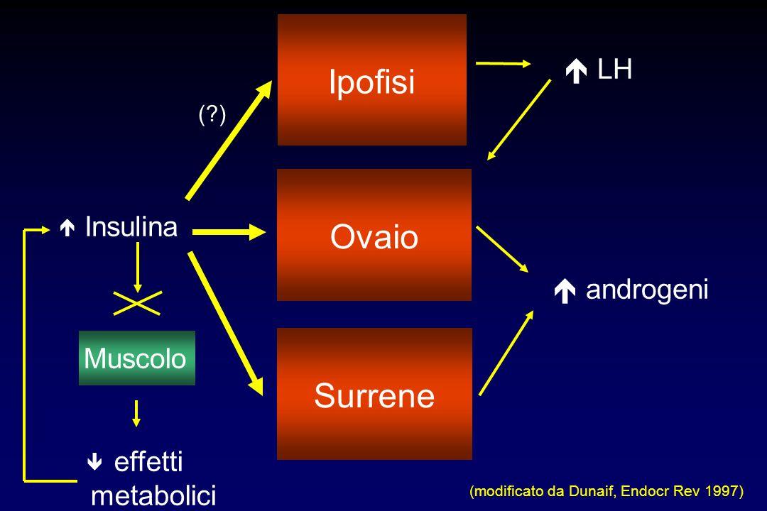 Ipofisi Ovaio Surrene  LH Insulina  androgeni Muscolo effetti