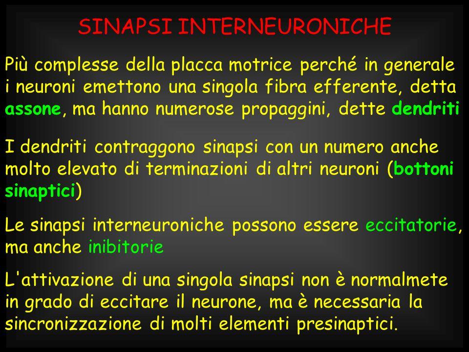 SINAPSI INTERNEURONICHE