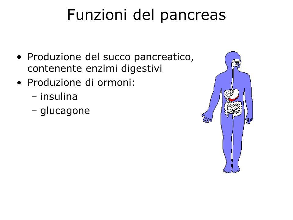 Funzioni del pancreas Produzione del succo pancreatico, contenente enzimi digestivi. Produzione di ormoni: