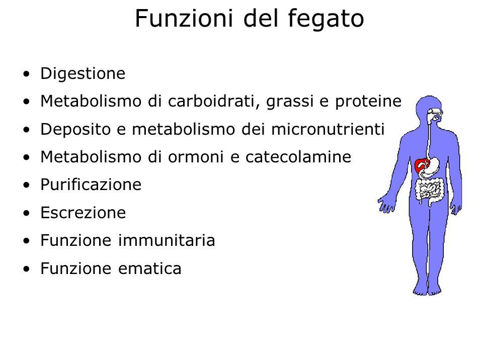 Funzioni del fegato Digestione