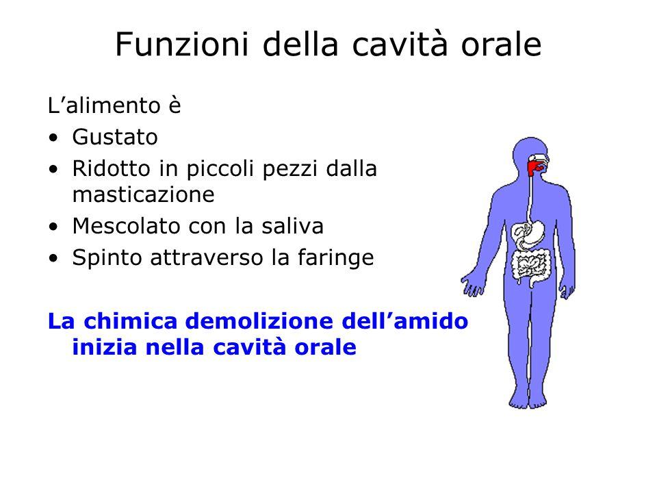 Funzioni della cavità orale