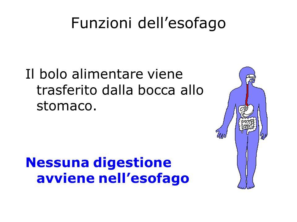 Funzioni dell'esofago