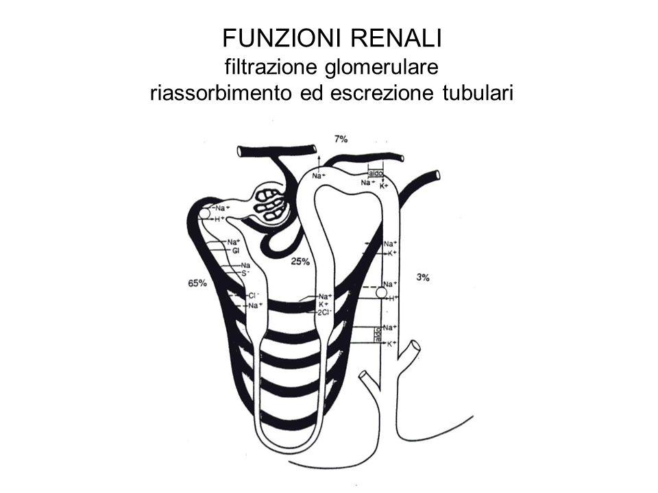FUNZIONI RENALI filtrazione glomerulare