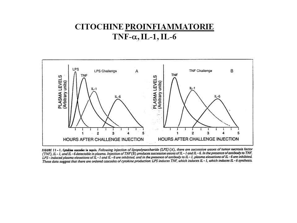 CITOCHINE PROINFIAMMATORIE