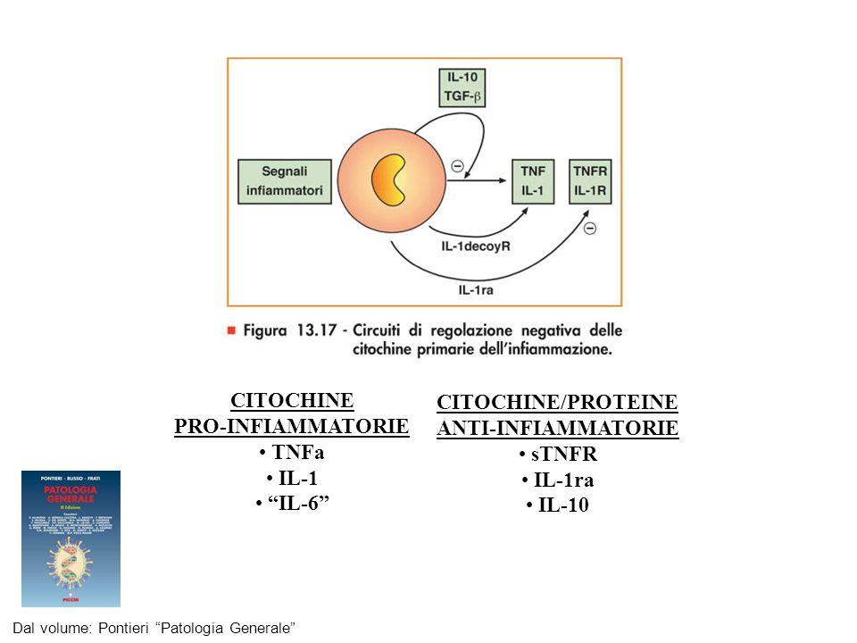 CITOCHINE CITOCHINE/PROTEINE PRO-INFIAMMATORIE ANTI-INFIAMMATORIE TNFa