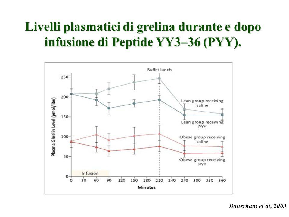 Livelli plasmatici di grelina durante e dopo infusione di Peptide YY3–36 (PYY).