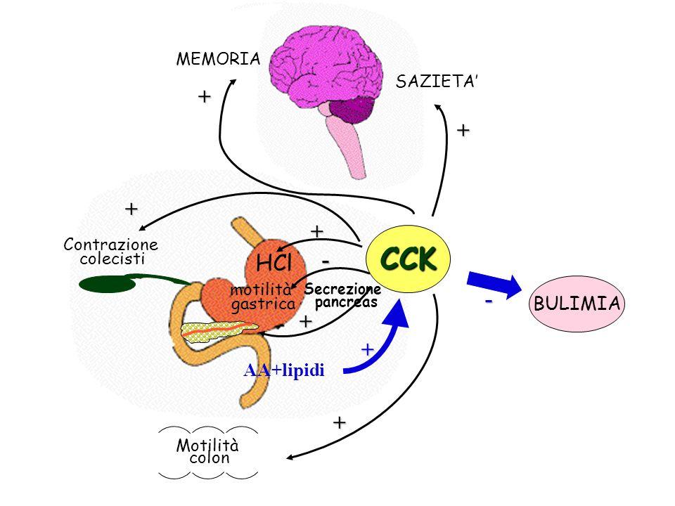 CCK + + + + - HCl - + + + BULIMIA AA+lipidi MEMORIA SAZIETA'
