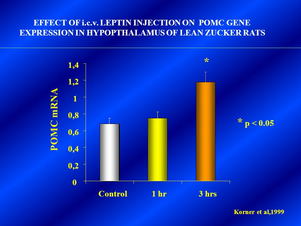 EFFECT OF i.c.v. LEPTIN INJECTION ON POMC GENE