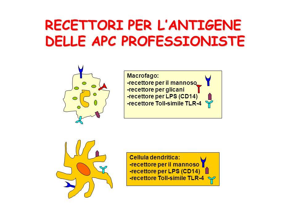 RECETTORI PER L'ANTIGENE DELLE APC PROFESSIONISTE