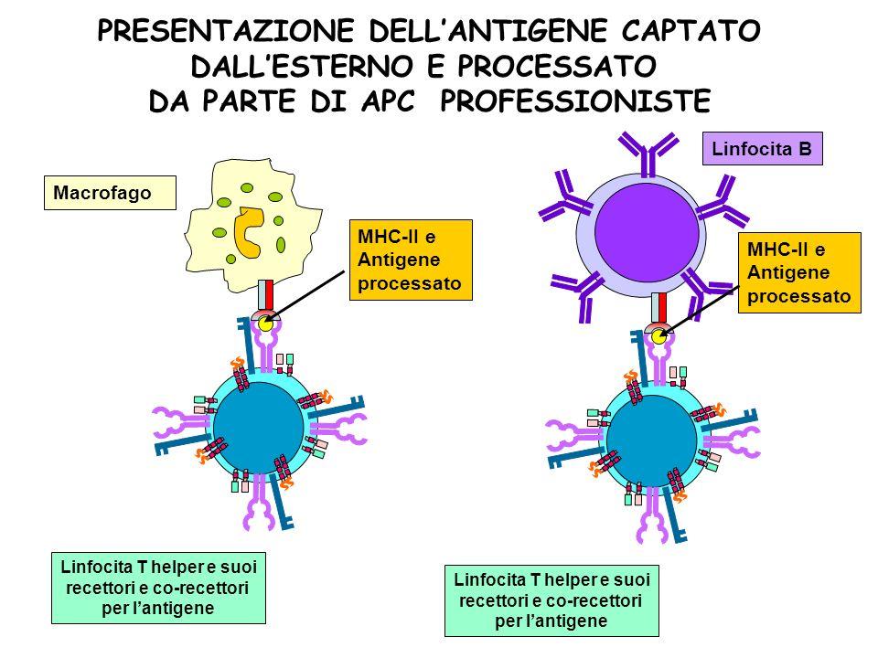 PRESENTAZIONE DELL'ANTIGENE CAPTATO DALL'ESTERNO E PROCESSATO