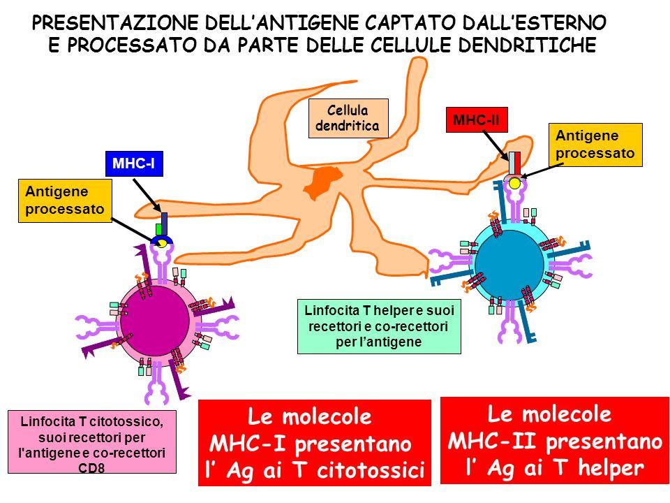Le molecole Le molecole MHC-II presentano MHC-I presentano
