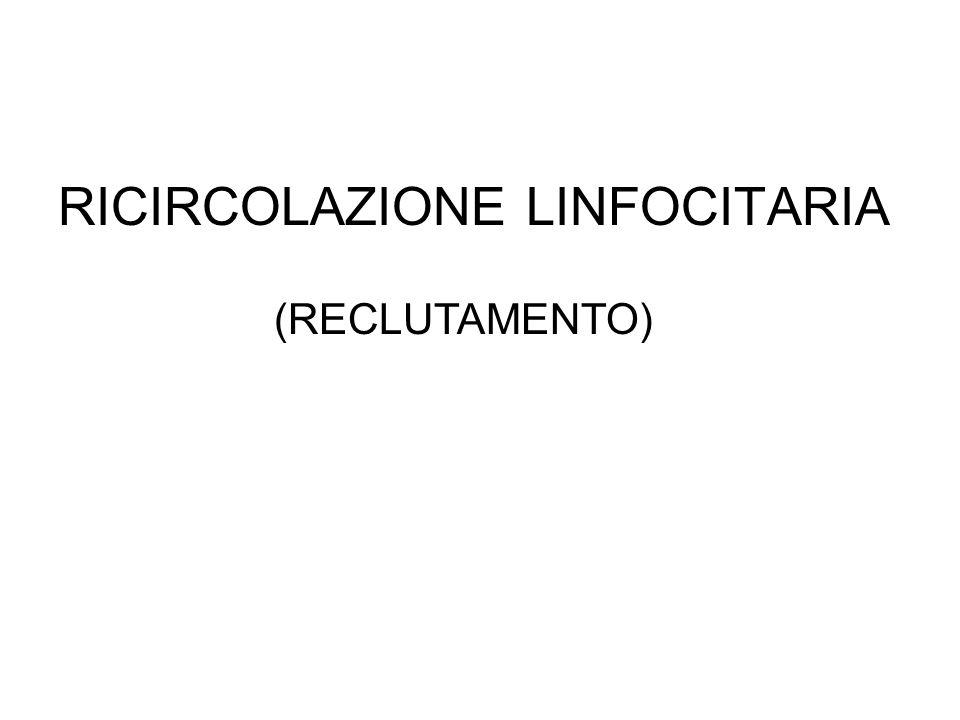 RICIRCOLAZIONE LINFOCITARIA