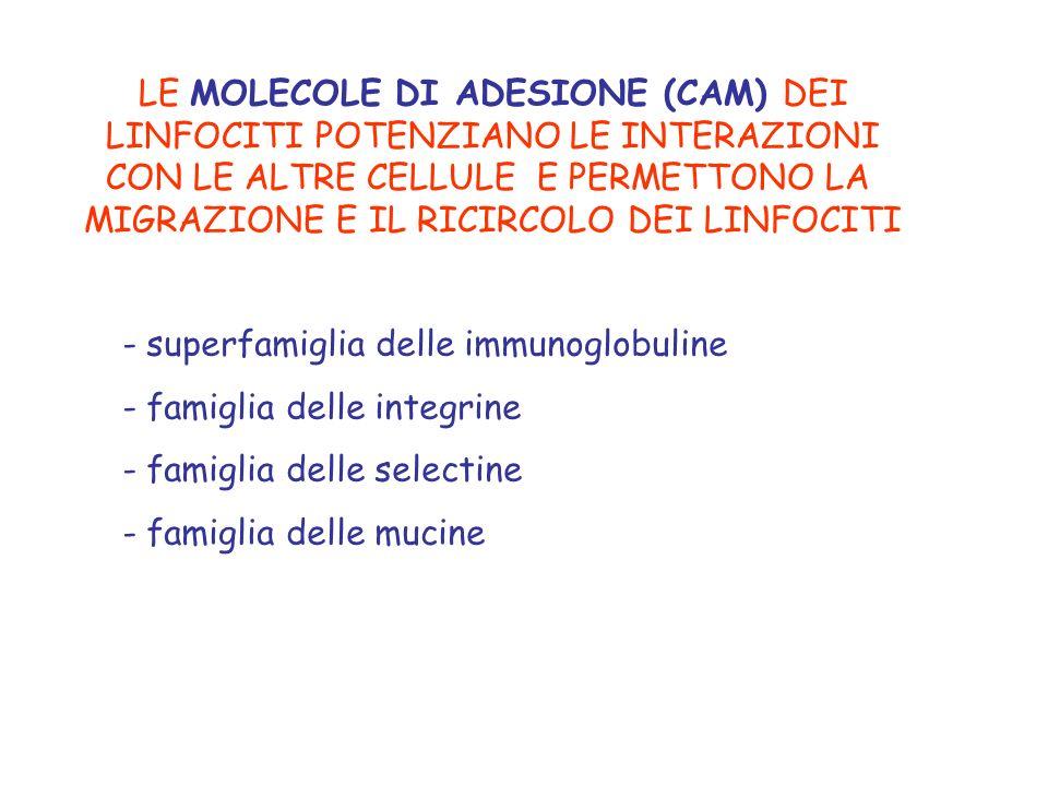 LE MOLECOLE DI ADESIONE (CAM) DEI LINFOCITI POTENZIANO LE INTERAZIONI