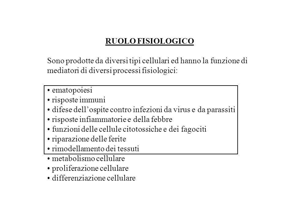 RUOLO FISIOLOGICO Sono prodotte da diversi tipi cellulari ed hanno la funzione di mediatori di diversi processi fisiologici: