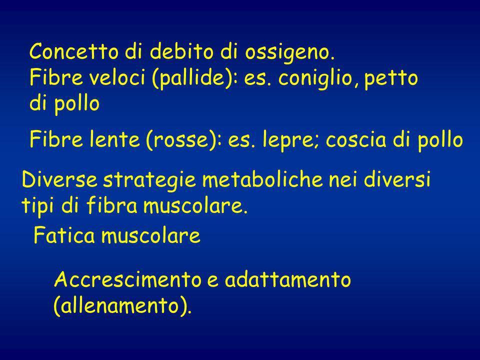 Le basi molecolari della contrazione ppt scaricare - Diversi tipi di energia ...